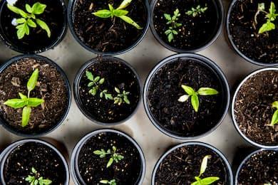planter des arbres gratuitement avec bourgad